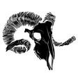 black silhouette a goat skull vector image