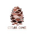 cedar cone sketch for your design vector image