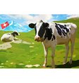 Cows on mountain meadow vector image