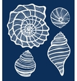 hand-drawn shell set vector image