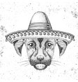 hipster animal dog wearing a sombrero hat vector image