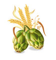 hops and wheat ears realistic green fresh vector image vector image