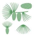 Pine vector image