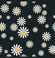 seamless pattern with camomile flowers on black vector image