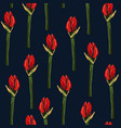 tropical red lily flowers bud pattern vector image vector image