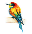 bee eater hand drawn bird watercolor colored vector image vector image