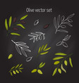 set of olive branches vector image
