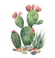 watercolor collection cacti and vector image vector image