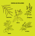 essential oils fot allergy treatment vector image