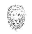 hand drawn lion head lion face vector image vector image