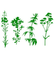 herbal green vector image vector image
