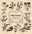 hand drawn herbs officinalis medicinal vector image vector image