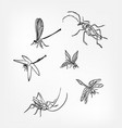 insects set sketch dragonfly design elements vector image