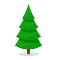 isolated christmas fir tree on white background vector image vector image