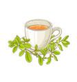 marjoram tea vector image vector image