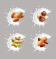 nuts in milk hazelnuts almond pistachio peanut vector image