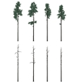 pinetrees set in flat colors vector image