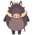 wild pig on white background vector image vector image