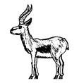 gazelle vector image vector image