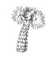 palm leaves tree high trunk monochrome vector image vector image