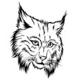 shows an angry bobcat face the vector image vector image