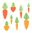 simple juicy carrots isolated on white background vector image
