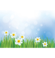 daffodil flowers on spring background vector image vector image