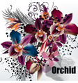 fashion tropical flowers plants orchids vector image