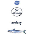 fresh anchovy watercolor vector image vector image