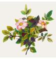 Dog rose vector image