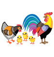 cartoon rooster hen and chickens vector image