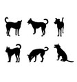 set of dog silhouette on white vector image