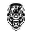 a gorilla biker vector image