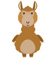 brown alpaca on white background vector image vector image