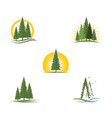 cedar tree logo template vector image