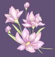 flower branch violet vector image vector image