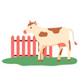 pasture cattle cow walking outdoor farm vector image vector image