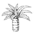pineapple palm tropical tree monochrome vector image
