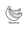 bananas thin line icon isolated fruit linear vector image