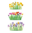 bouquet with spring flowers vector image