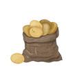 natural drawing potato tubers in burlap bag