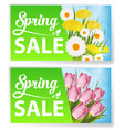 spring sale with tulips and grass vector image