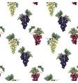 watercolor grape pattern vector image vector image