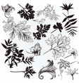 hand drawn leafs silhouettes vector image vector image