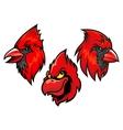 Cardinal bird heads set vector image vector image