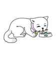 cat eating drinking milk isolated on white vector image