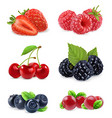 Forest berry Sweet fruit Realistic 3d icon set vector image vector image