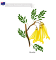 Kowhai Flowers The National Flower of New Zealand vector image vector image