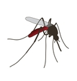 mosquito a realistic mosquito vector image vector image