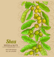 shea branches pattern on color background vector image